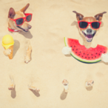 How to prepare and save on summer spending